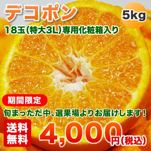 桜島デコポン5kg