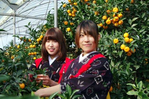 小みかん娘in桜島小みかんハサミ入れ式