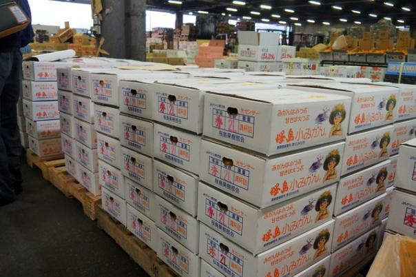 競り落とされた桜島小みかんはこれから全国へ発送されていきます