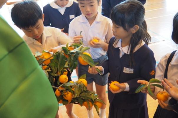 講話のあとは収穫体験。桜島から持ってきた枝なり桜島小みかんを使ってハサミいれを体験していただきました。みんな上手に収穫できていましたよ(^^)