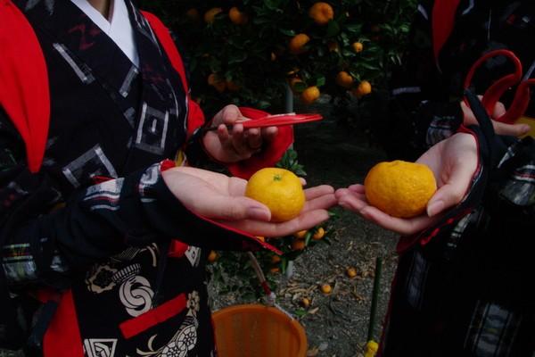 手のひらサイズで可愛らしいの桜島小みかん