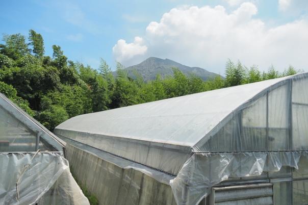 坂元さんのハウス農園