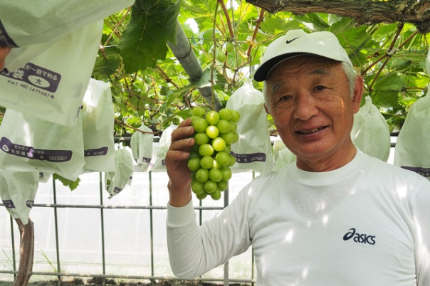桜島を代表するベテラン農家 坂元さん